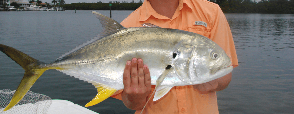 Gulf of Mexico island hopping, eco tours, saltwater fishing, fishing charters, fishing guides