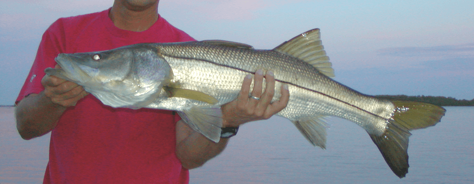 fishing southwest florida / fort myers, fort myers beach, sanibel, captiva, Pine Island, boca grande