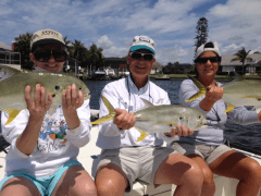 Jack Crevalle and Friends