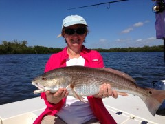 Sanibel Redfish