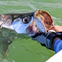 Fort Myers and Sanibel Fishing Charter Report